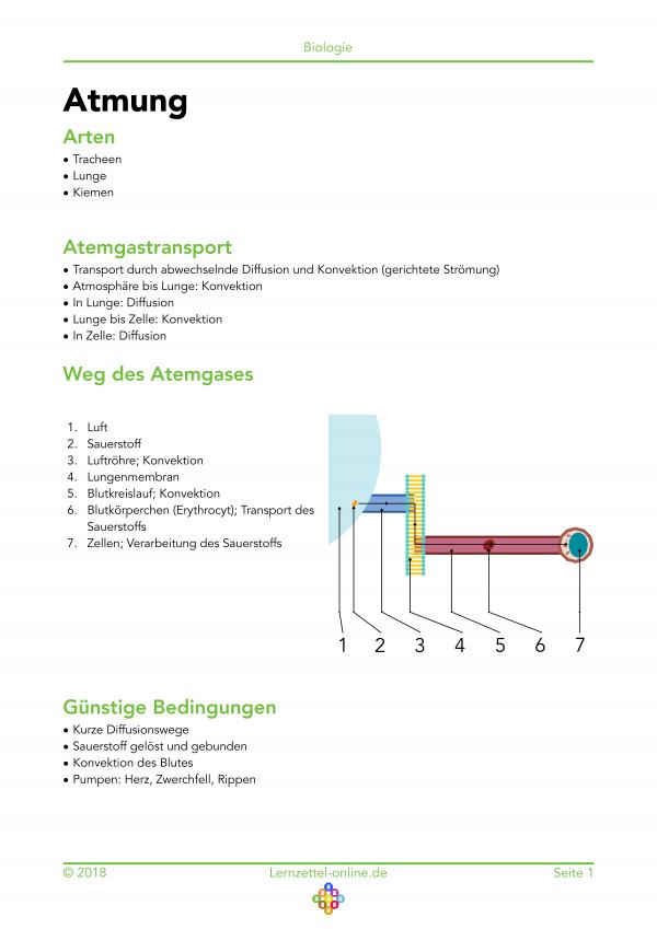 Großartig Aerobe Atmung Arbeitsblatt Bilder - Arbeitsblätter für ...