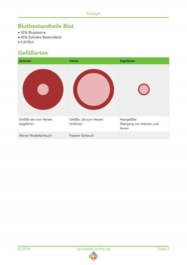 Lernzettel Blutkreislauf Onlineansicht